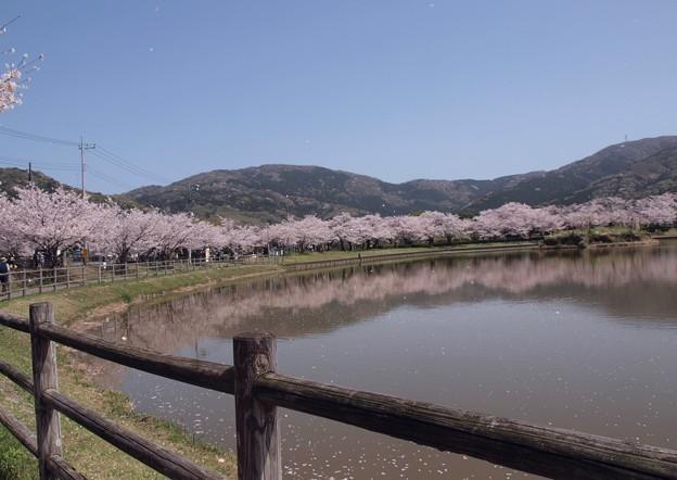 2021/03/31_大池公園_7