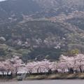 Photos: 2021/03/31_大池公園_8