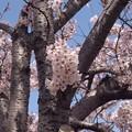 Photos: 2021/03/31_大池公園_9