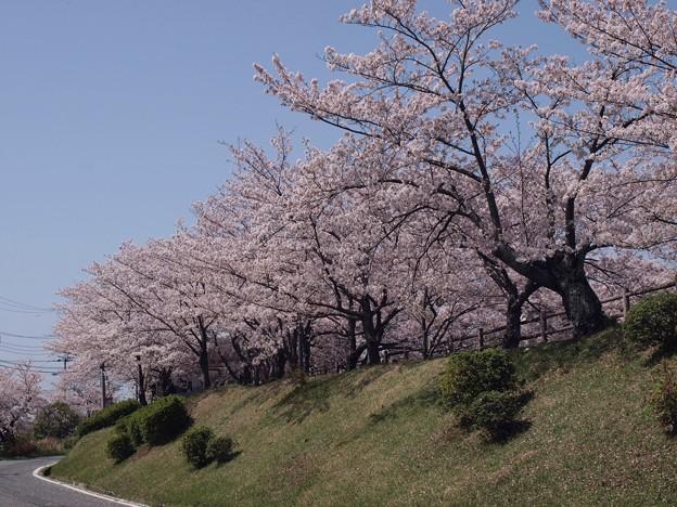 2021/03/31_大池公園_10