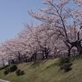 Photos: 2021/03/31_大池公園_10
