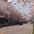 Photos: 2021/03/31_農林さくら通り_1