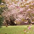 Photos: 2021/04/09_高崎自然の森_1