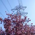 Photos: 2021/04/10_高崎自然の森_02