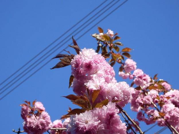 2021/04/10_高崎自然の森_03
