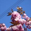 Photos: 2021/04/10_高崎自然の森_03