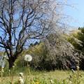 Photos: 2021/04/10_高崎自然の森_05