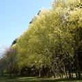 Photos: 2021/04/10_高崎自然の森_08