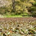 Photos: 2021/04/10_高崎自然の森_09