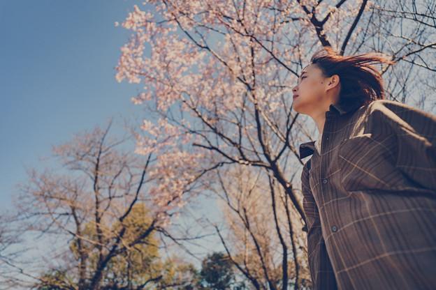 薄い桜色の風