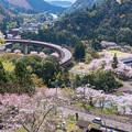 Photos: ループ橋と桜