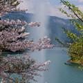 Photos: 噴水と桜