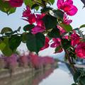 Photos: 深紅に彩られた運河