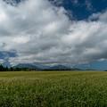 Photos: 波野のそば畑