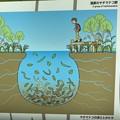 ヤチマナコのイメージ