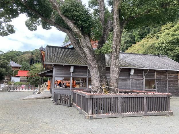 「勝ちダルマ」の寺  勝尾寺