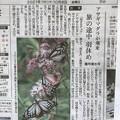 アサギマダラが飛来 神戸新聞の記事