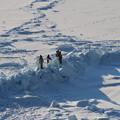流氷で遊ぶ