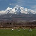 白鳥遊ぶ季節