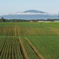 Photos: タマネギ畑で