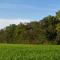 Photos: 秋の彩り始まる