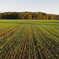 芽吹きを迎えた秋まき小麦