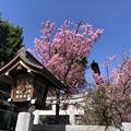 Photos: 2月_京浜伏見稲荷神社 4