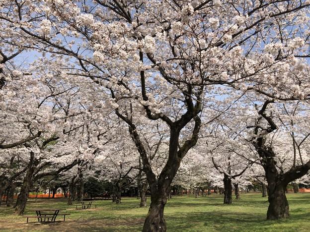 3月_代々木公園 2