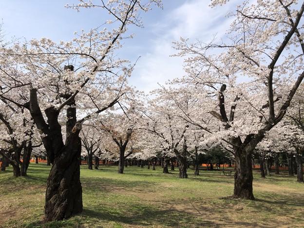 3月_代々木公園 4