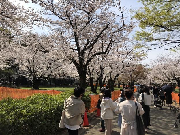 3月_代々木公園 1