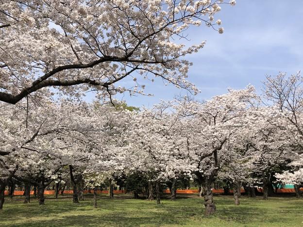 3月_代々木公園 3