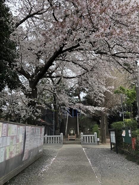 3月_愛宕神社 1