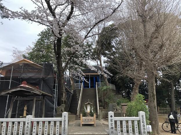 3月_愛宕神社 2