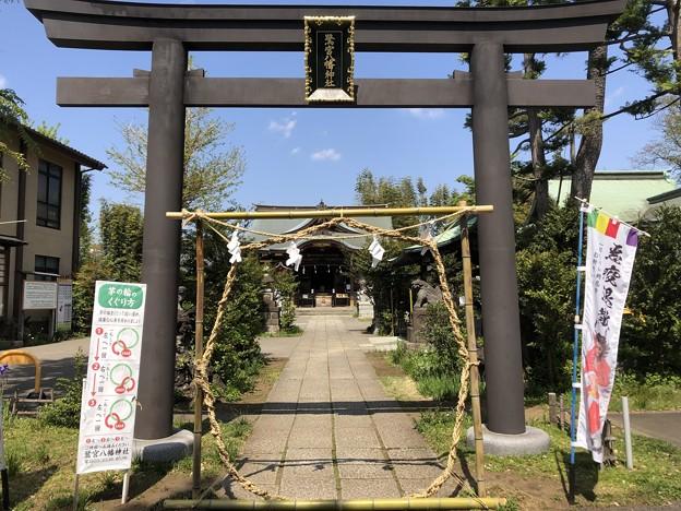 4月_鷺宮八幡神社 1