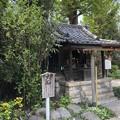 4月_鷺宮八幡神社 4