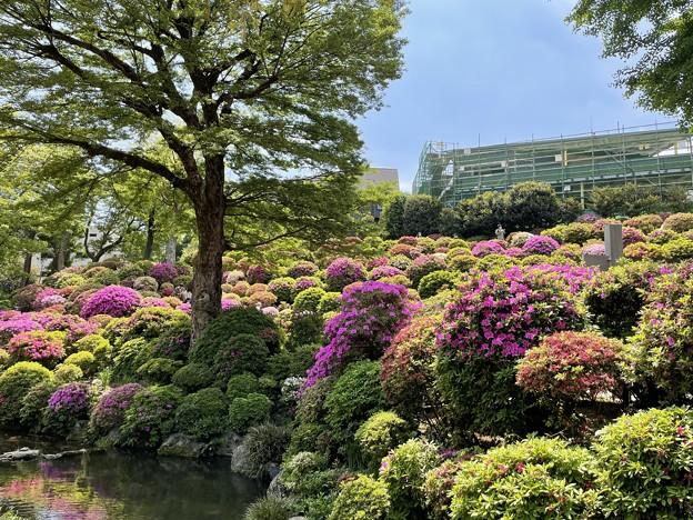 4月_根津神社 6