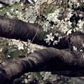 Photos: 斜面から枝を延ばす