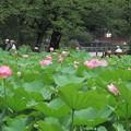 Photos: 上野蓮見へ