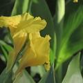Photos: 元気な花