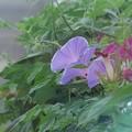 花は知らねど