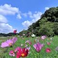 Photos: 秋の空へ