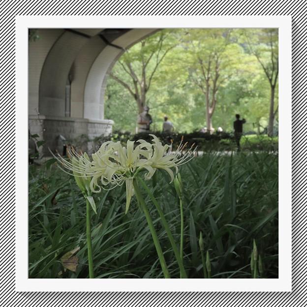 Photos: 森の橋