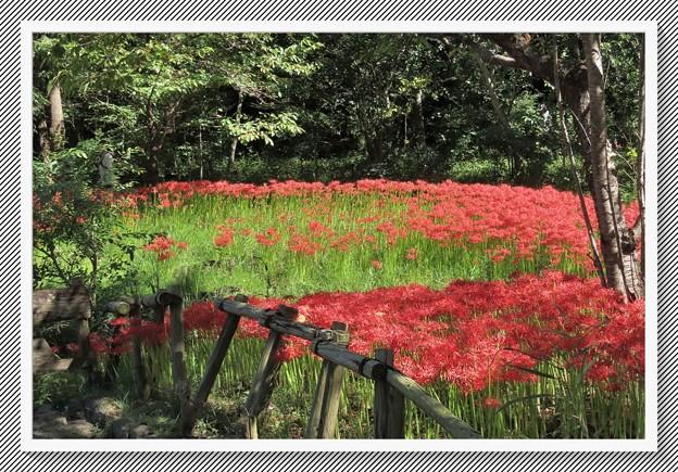 Photos: 満開のお花畑