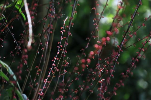 Photos: 赤玉
