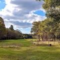 公園も秋色へ