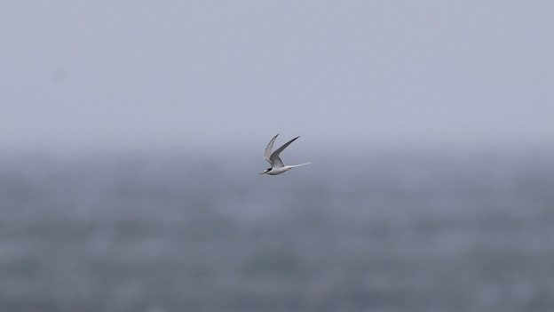 Photos: 大海原に挑む