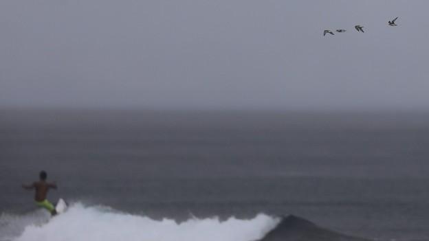 台風と渡り鳥