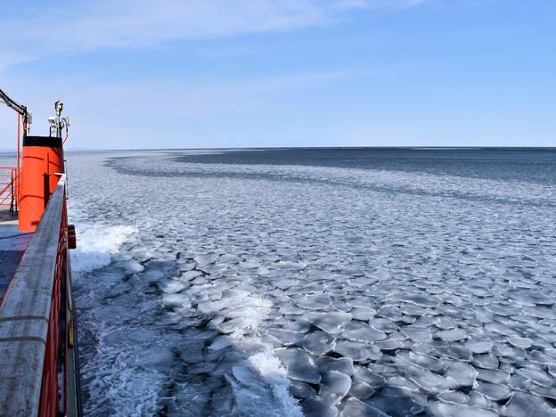 紋別流氷(ガリンコ号が「蓮の葉氷」に乗り上げるように進むが、薄いので衝突の抵抗感は皆無)