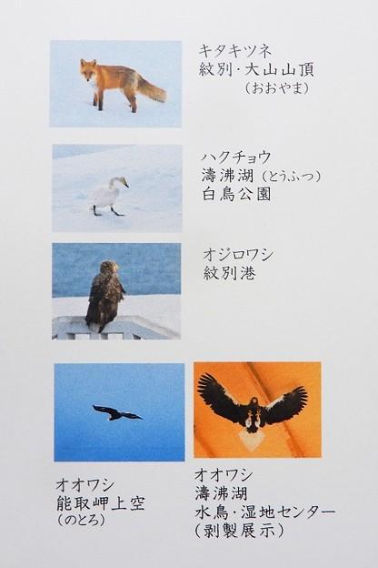 旅・岬巡り報告267 流氷(紋別・網走・知床)&同写真説明) (2)
