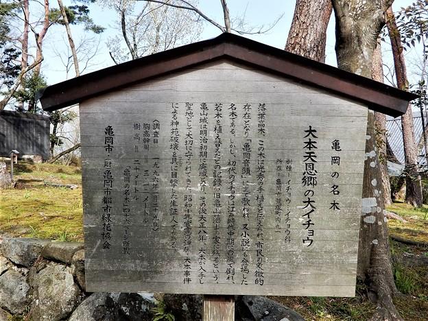 亀山城址 (13)